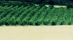 Vinery in the Summer 2 heat mirage stylized Stock Footage