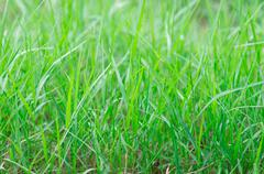 Tropical green grass Stock Photos