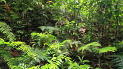 Rainforest gully  Stock Footage