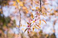 Sakura pink blossom flowers with blur background. Stock Photos