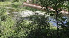 A footbridge spans a forested pond - stock footage