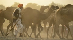 Camels in Rajasthan India Stock Footage