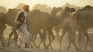 Stock Video Footage of Camels in Rajasthan India