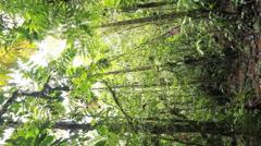 Tree fern growing in tropical rainforest. Stock Footage