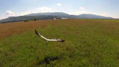 Aerial view of white stork in flight Stock Footage