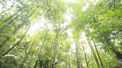 Rainforest tree cut for timber. Stock Footage