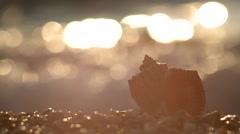 evening seascape - stock footage