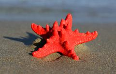 red starfish with sturdy armor on the beach - stock photo