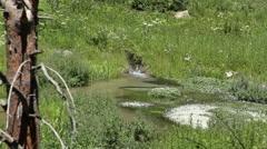 Little creek bubbles along into little pool Stock Footage