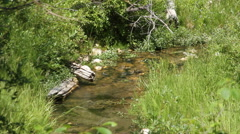 Creek trickles through the brush Stock Footage