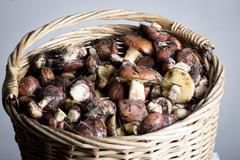 Mushrooms in basket Stock Photos