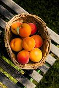 Apricots in a basket, Prunus Armeniaca - stock photo
