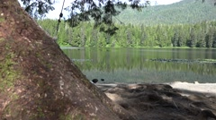 Stock Video Footage of Campground rope swing from tree in forest