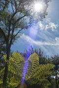 Takaka, fern tree and sun in back light along the Pupu Hydro Walkway Stock Photos