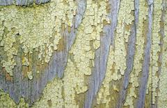 texture of old wood with remnants of yellow paint closeup as background - stock photo