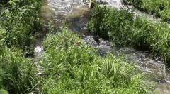 Creek divides into three streams Stock Footage
