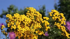 Bouquet of wildflowers Stock Footage