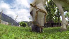 0382 White horse eating, close up Stock Footage
