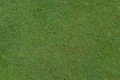 Golf green close up Stock Photos