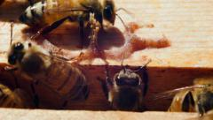 Bees made ​​a tree house Stock Footage