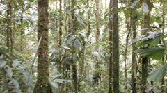 Walking through tropical rainforest  Stock Footage