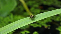 Hover Fly Stock Footage