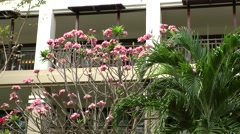 Thailand Pattaya 016 ravindra beach resort, the balconies behind exotic plants Stock Footage