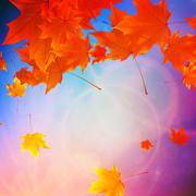 Stock Illustration of Beautiful autumn Leaves.