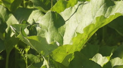 Burdock in the forest Stock Footage
