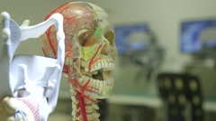 Human skull in science laboratory - stock footage