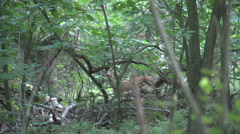 004 Roe deer in the forest Stock Footage