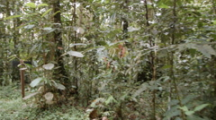 Time-lapse of mist blowing through tropical rainforest  Stock Footage