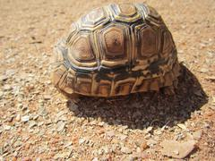 Tortoise shell - stock photo