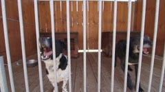 Dogs in kennel bark - stock footage