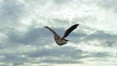 Pöllö lentää taivas taustalla - 3 eri mieltä - Arkistovideo