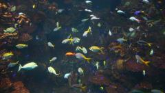 4of10 Tropical fish, coral reef at Osaka Aquarium, Japan, Asia - stock footage
