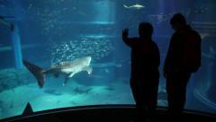 6of10 Fish, whale shark, animals at Osaka Aquarium, Japan, Asia Stock Footage