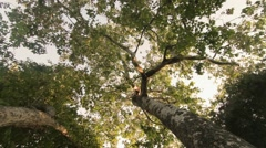 Dollying under a green leafy tree - stock footage