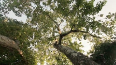 Dolly right under green leafy tree - stock footage