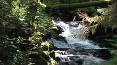 "Scenic ""Lunch Creek""  Tongass National Forest Stock Footage"