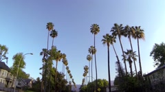 California Palm Trees Driving Slow Motion Stock Footage