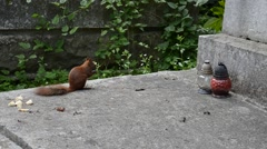 Stock Video Footage of Squirrel on a grave. Lviv, Ukraine.