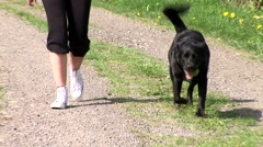 Girl and dog on the walkway Stock Footage