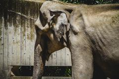 Huge and powerful african elephant Stock Photos