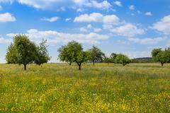 hayfield in spring - stock photo