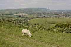 Stock Photo of countryside at steyning. sussex. england