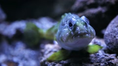 Fish looking at the camera Stock Footage