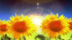 1965 Flying Into Heaven with Sunflowers Glowing, HD Stock Footage
