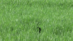 Dog found a ball in the grass Stock Footage