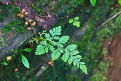 forest ferns and fallen log - stock photo